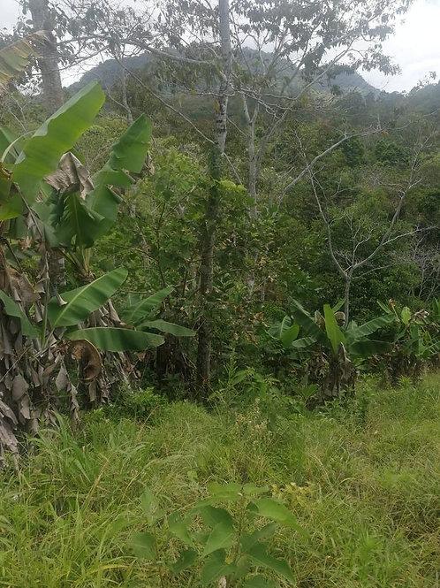Terreno Costa Rica Pavones de Turrialba