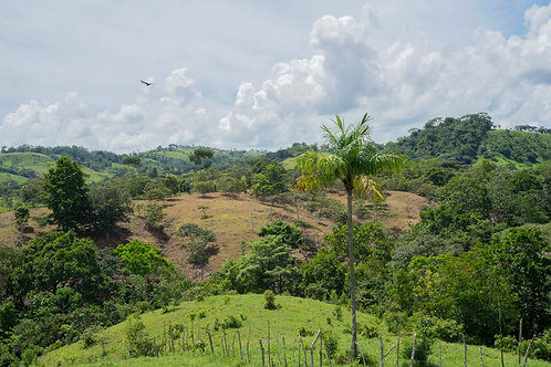 Terreno Panama del Espino de la Chorrera