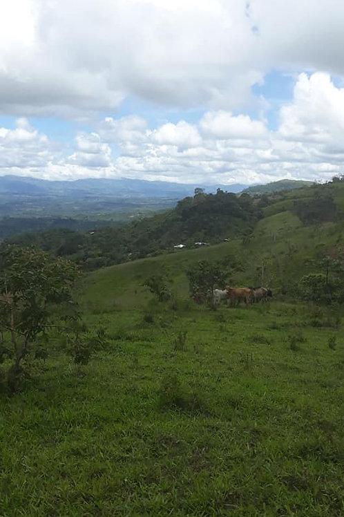 Finca Costa Rica Santiago de San Pedro de Pérez Zeledón