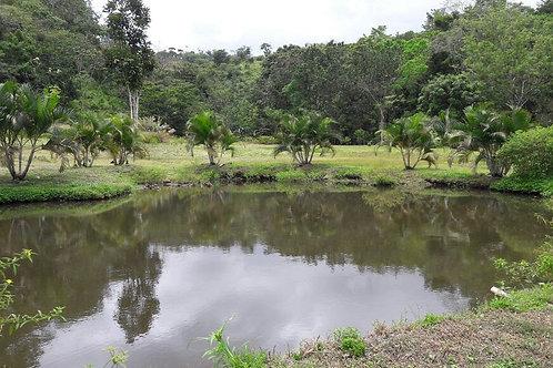 Terreno Panama Del Espino