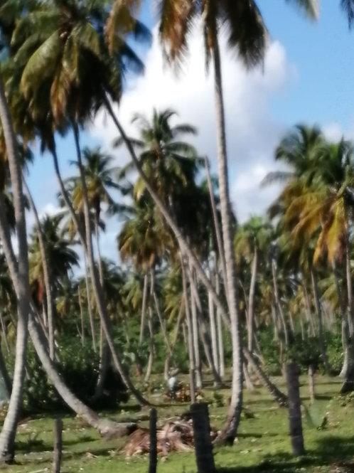 Terrenos Rep Dom Miches