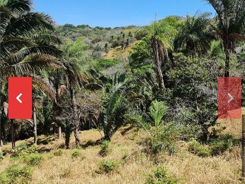 Finca Costa Rica San Mateo Alajuela