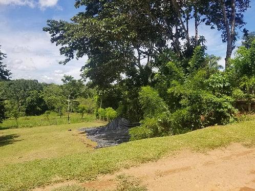 Terreno Panama  Interamericana Perequete
