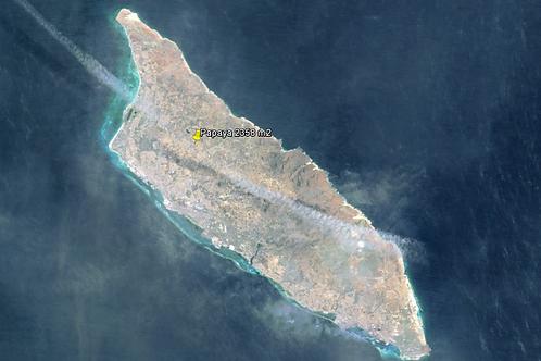 Terrein AUA Papaya