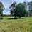 Thumbnail: Terreno Rep Dom Uvero Alto, La Altagracia