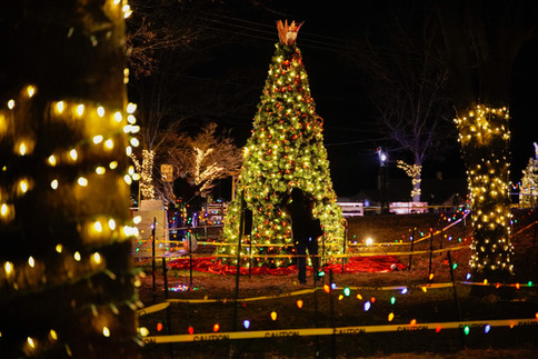 christmas trees 1.JPG