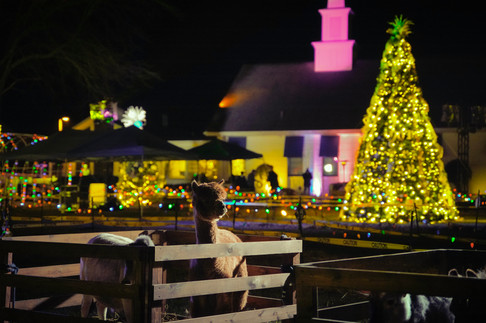 christmas trees 2.jpg