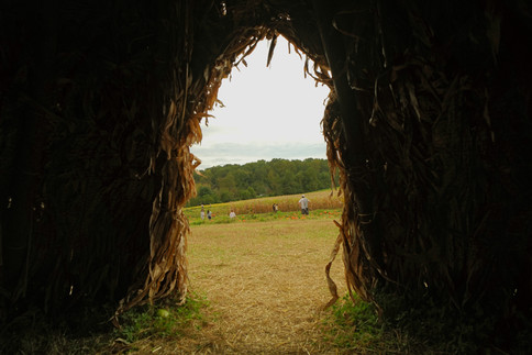 looking out of hay house for website.jpg