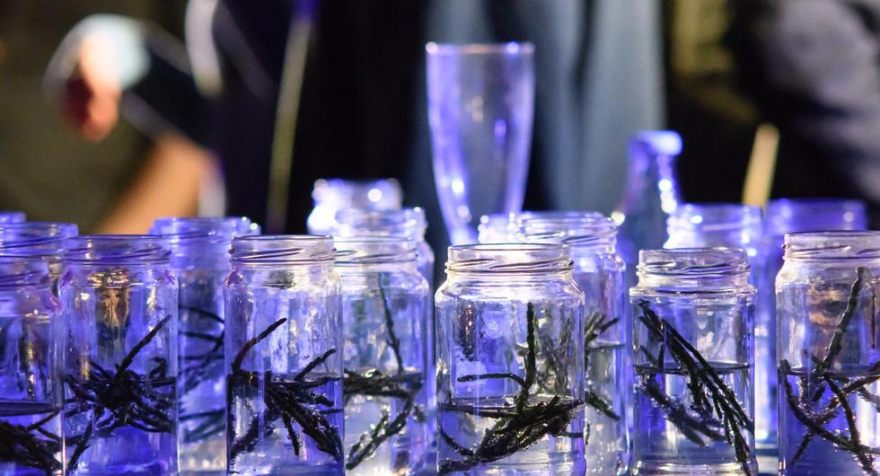 Openingsdrankje voor Panama Pictures: Zeekraal drankje (foto Ben Nienhuis)