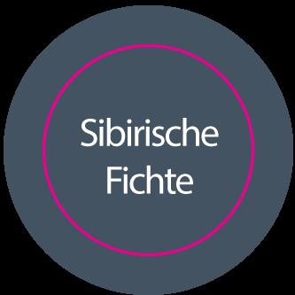 Aufkleber rund SIBIRISCHE FICHTE // BOGEN