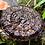 Thumbnail: Black Reishi (Ganoderma sinense)
