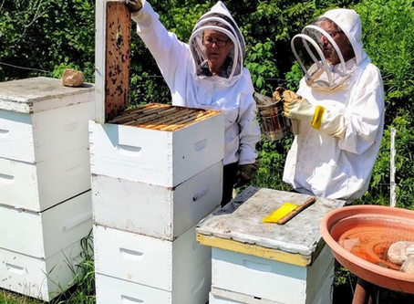 Northern Ontario Agriculture Spotlight: Beekeeping