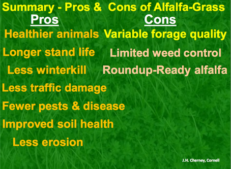 Forage Focus 2019: Alfalfa Grass Management for Silage