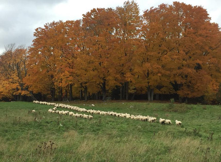 Northern Ontario Agriculture Spotlight: Wand Family Farm
