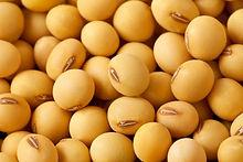 soybean Non GMO.jpg