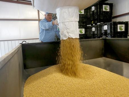 Top Brazil Soybean Suppliers