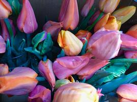 tulips-gallery.jpg