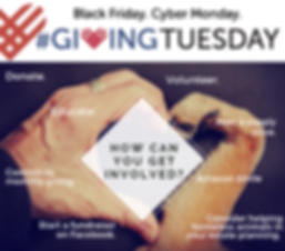GivingTuesdayGraphic2.png