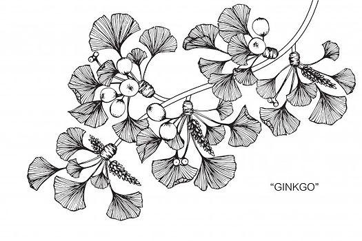 ginkgo-leaf-drawing-illustration_35970-2