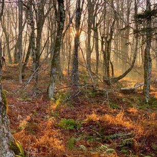 Wilderness Consultations Report