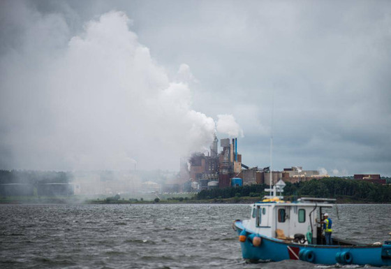 MacFarlane says province missed cue in Northern Pulp assessment process