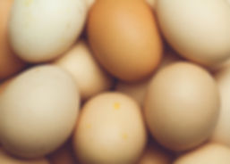 Bryant Family Farms Eggs at Homestead Meats Evanston
