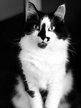 stella the cat