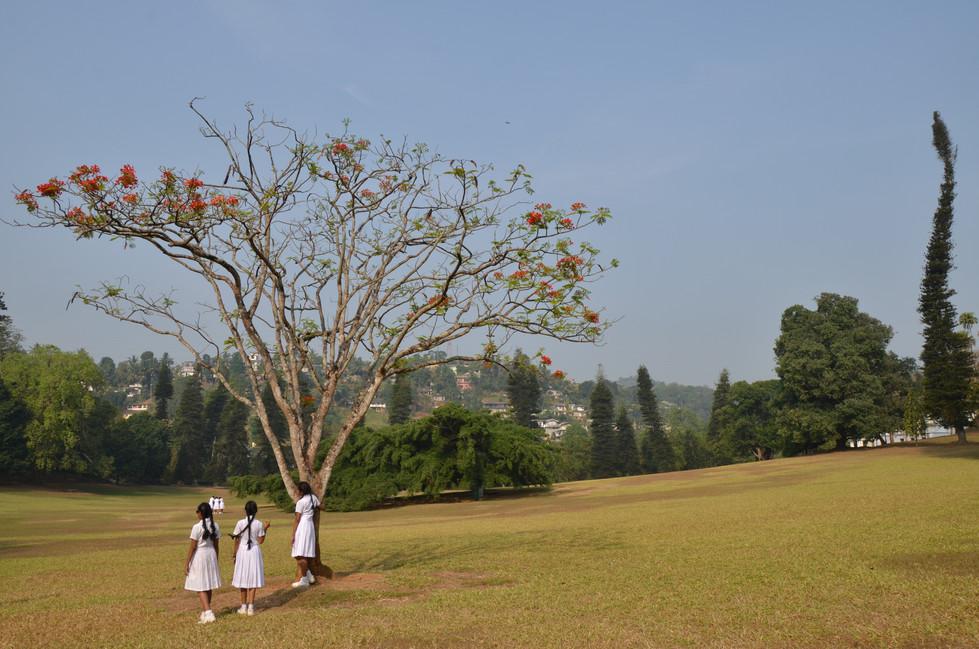 Sri Lanka15