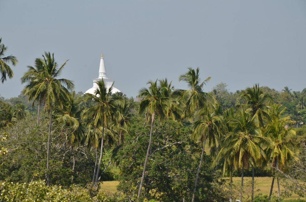 Sri Lanka05