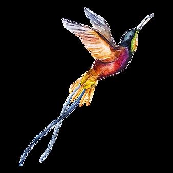 Watercolor%20Bird%202_edited.png