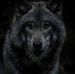 Wolf_edited_edited_edited.jpg
