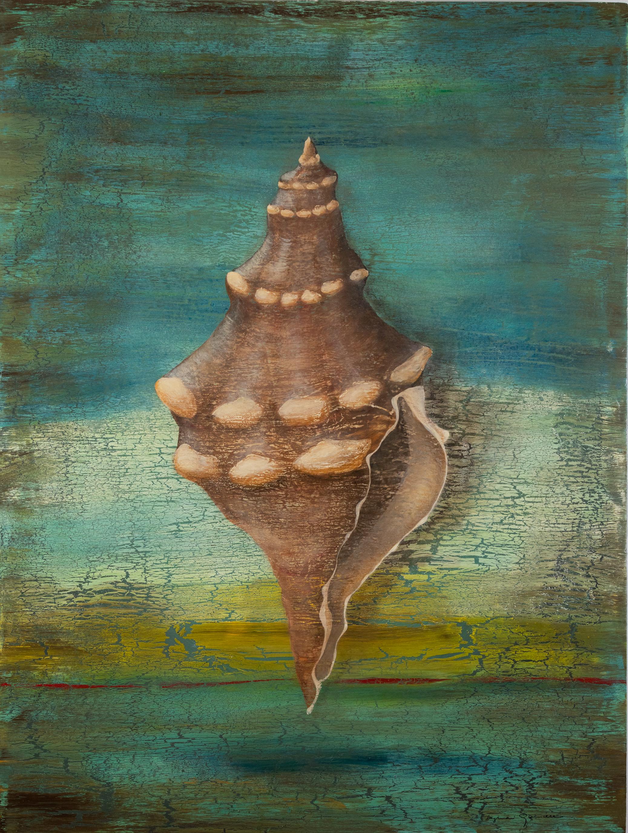 Striped Fox Sea Shell