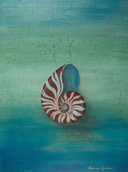 Blue Heart Nautilus