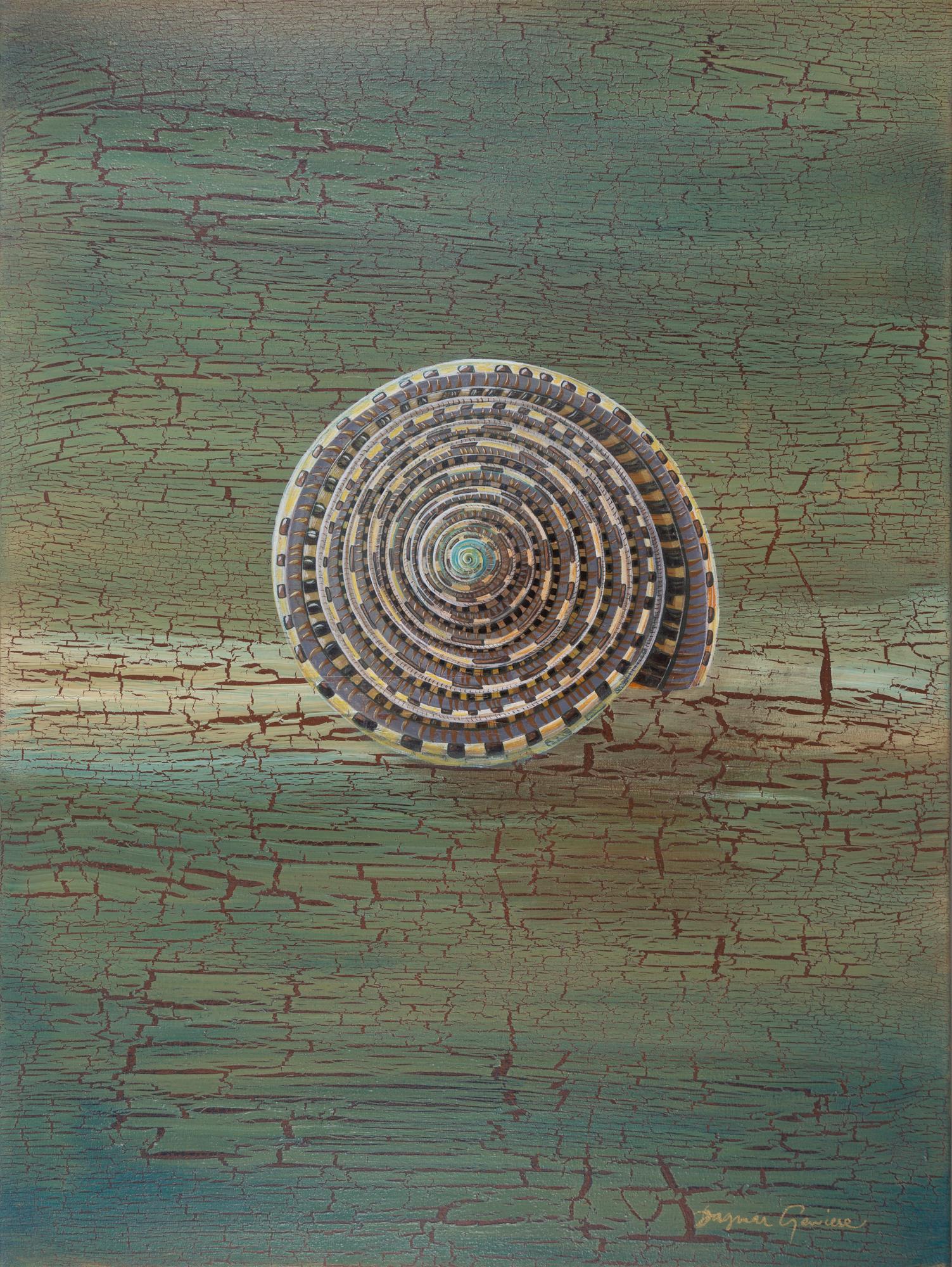 Sun Dial Shell