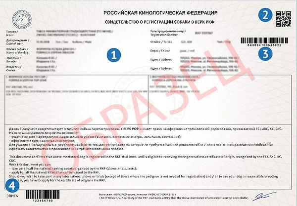 св. о регистрации.jpg