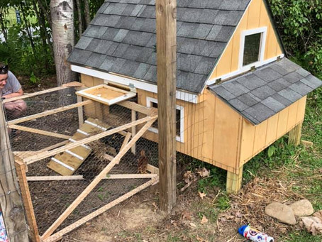 Ongoing chicken coop technology