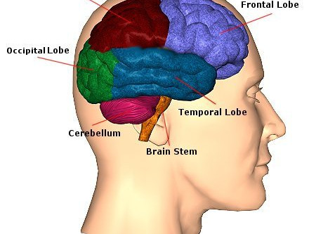 Big Brain Boost | Neuroscience | Remote | Virtual Hypnotherapy | Rebecca Jones | UK | Worldwide