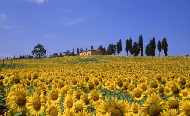 tuscany-villa-rental