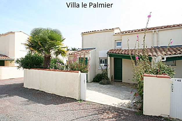palmier6.jpg