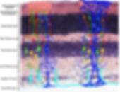 RetinaSectionwithArt.jpg