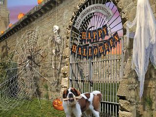 Halloween Hijinks Here