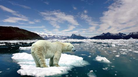 丘吉尔冰原,观北极熊