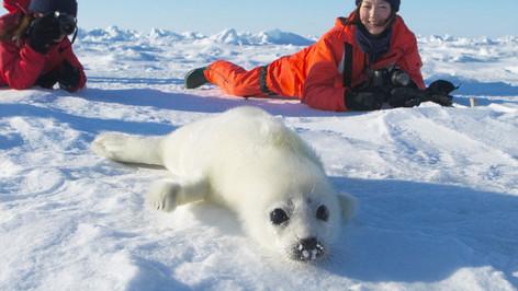 玛德琳岛,遇见海豹