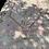 """Thumbnail: Delafield 4'2""""x8'"""