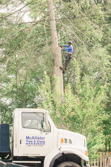McAlister Tree _ Hello Jude Photography-