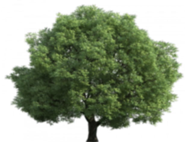 tree-green-11.png