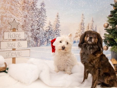 Winter Wonderland Pet Photography Fundraiser!