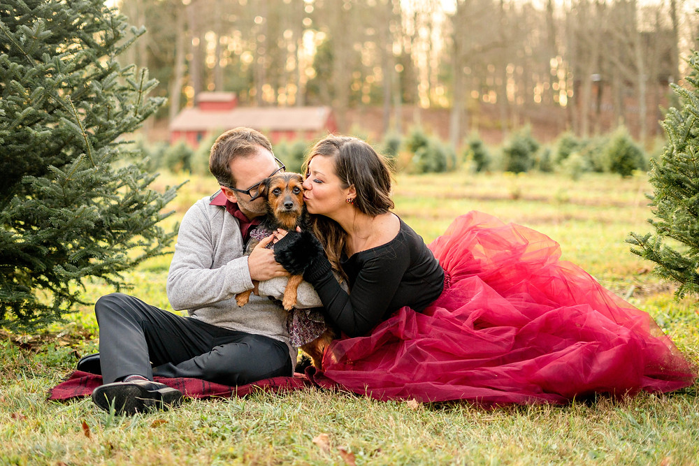 husband and wife kissing their small mixed breed dog on a tree farm with a red barn in the distance
