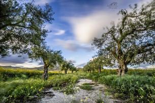 Editorial: Landscapes, By: Antonella Cunsolo