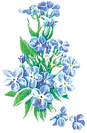 FORGET ME NOT_Flowers.png